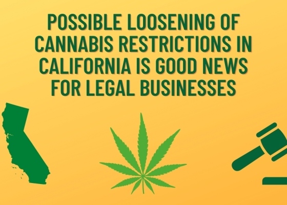 Possible Loosening of Cannabis Restrictions In California Is Good News For Legal Businesses